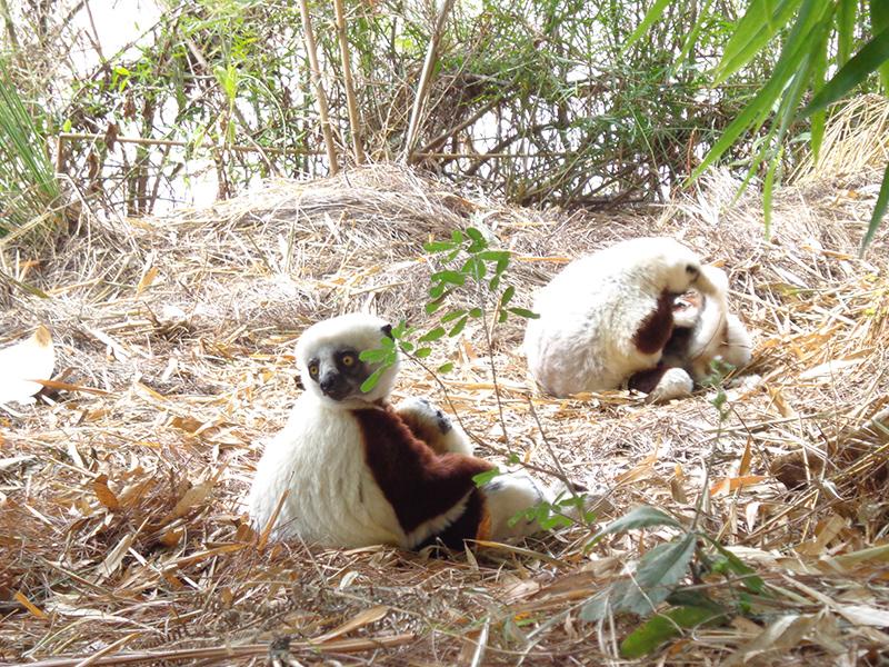 lemur-park-12