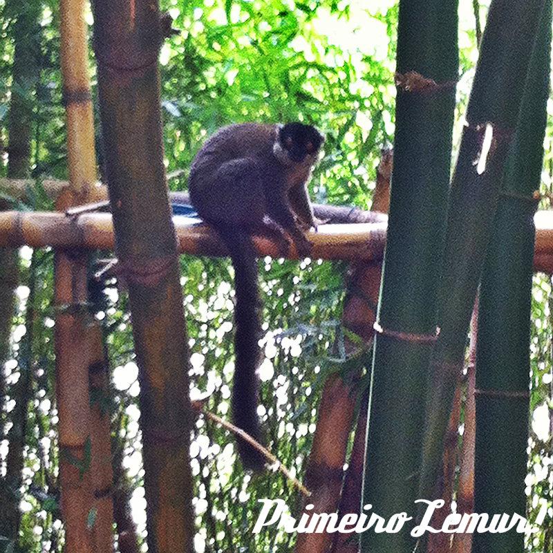 lemur-park-4