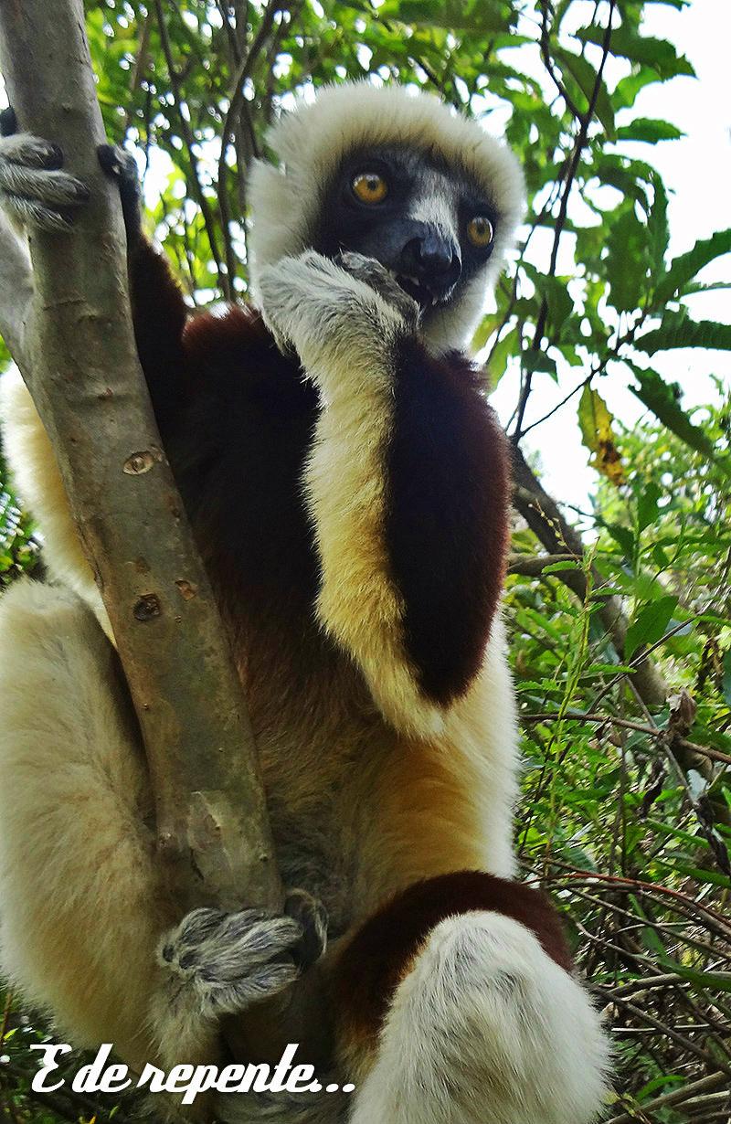 lemur-park-4a
