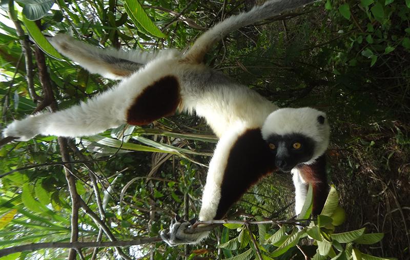 lemur-park-4b