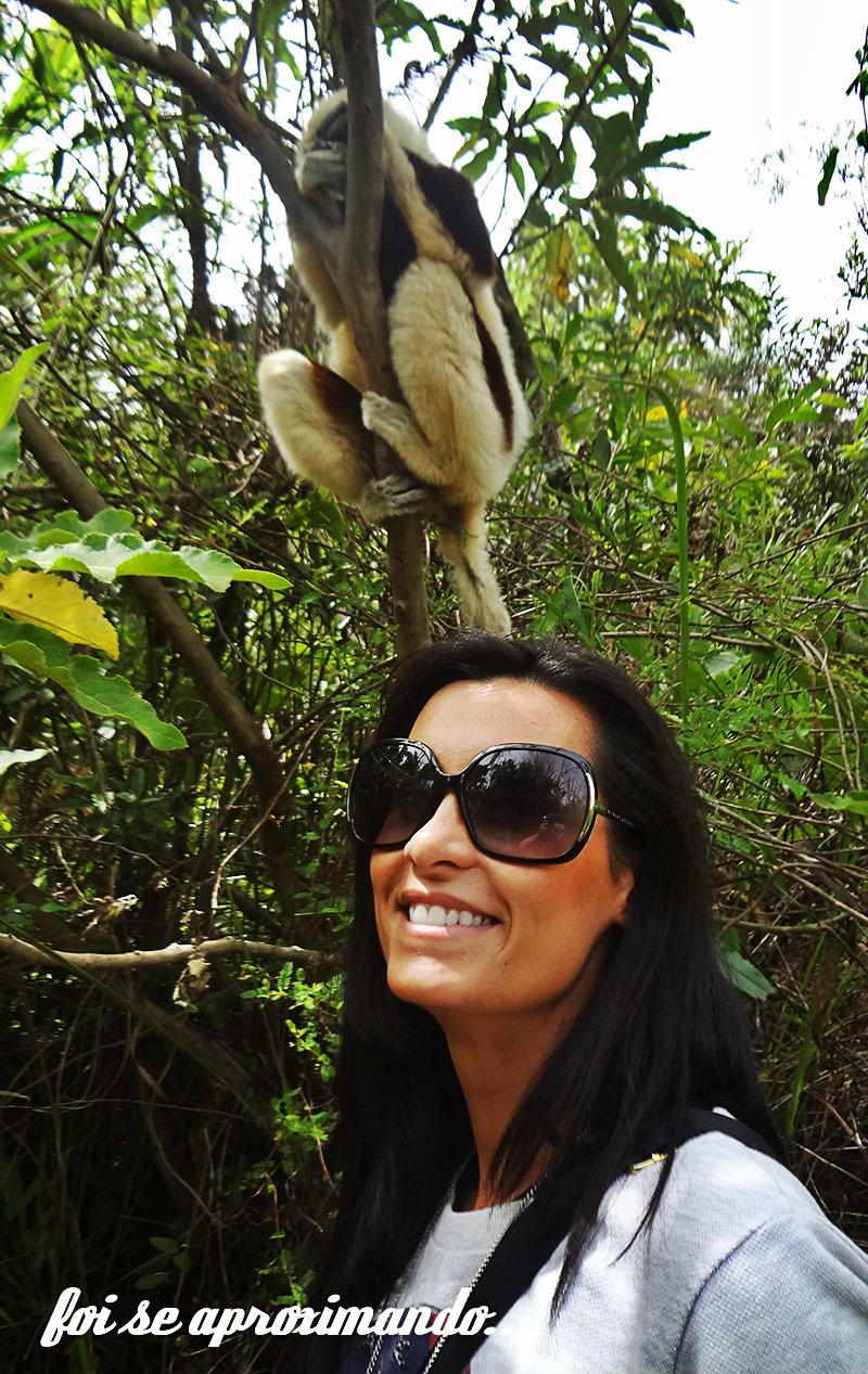 lemur-park-4bb