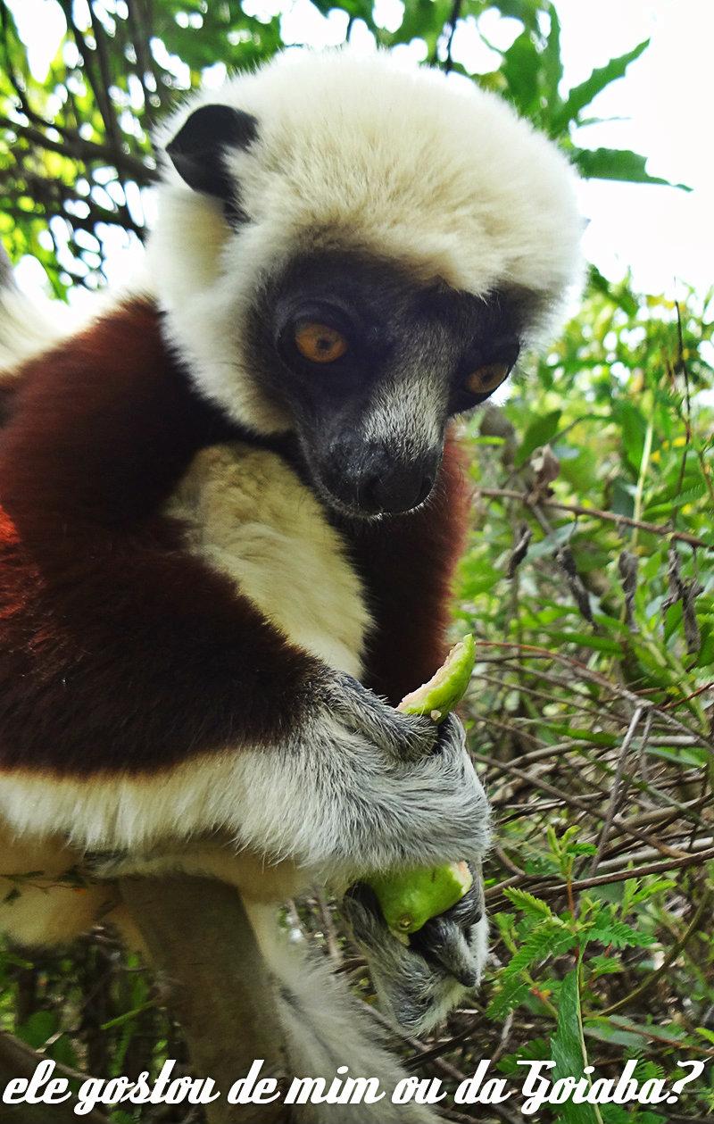 lemur-park-4c