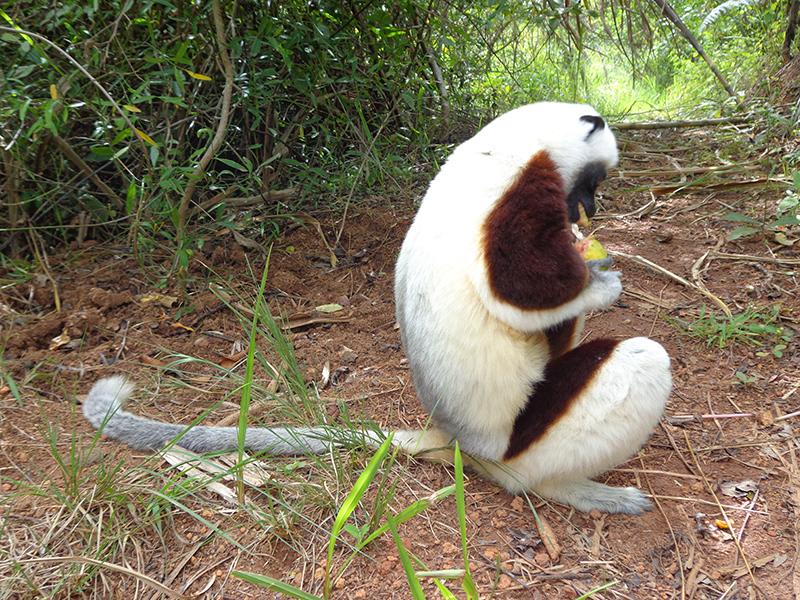 lemur-park-4d