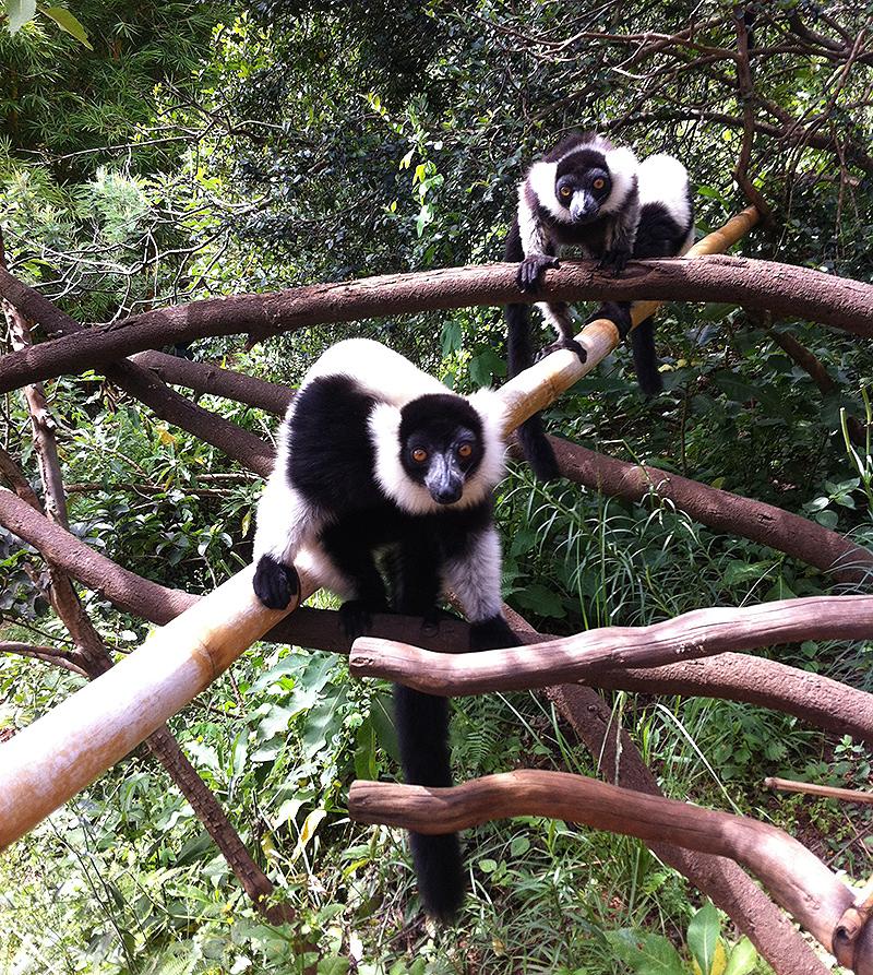 lemur-park-7