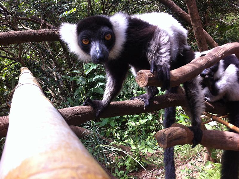 lemur-park-9