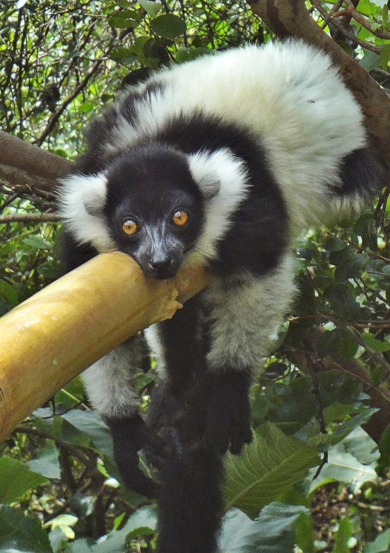 lemur-park-9a