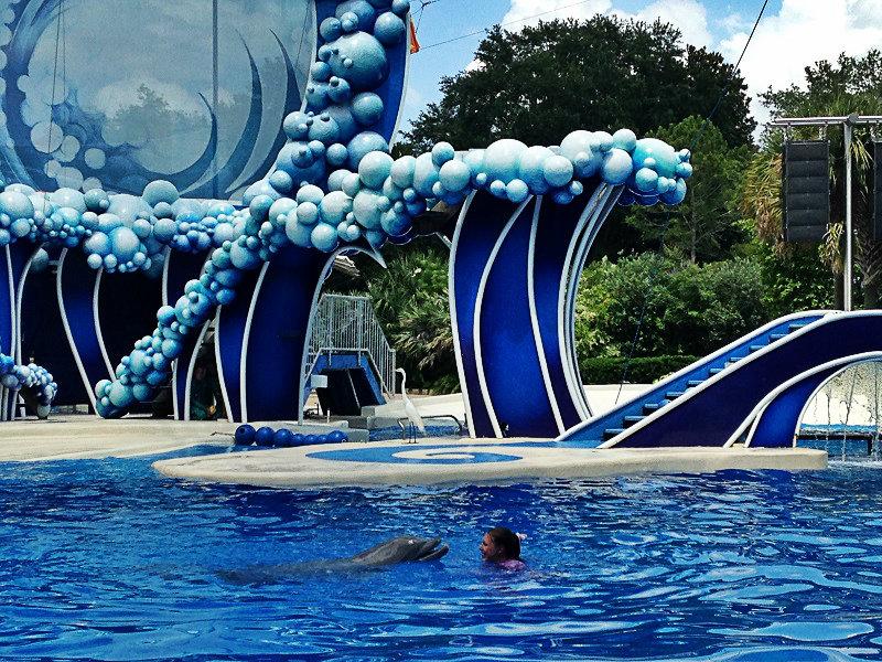 show-com-golfinhos-2
