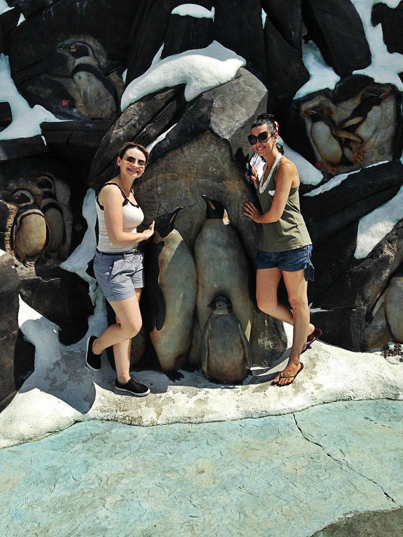 show-com-golfinhos-7